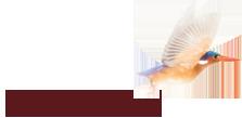 laucala logo.png