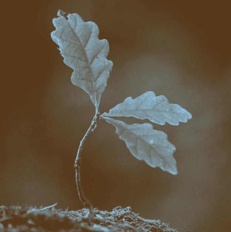 Small sapling.