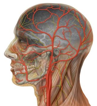 carotid-artery.jpg