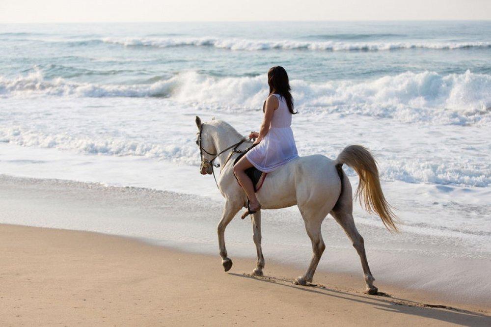 go-horse-back-riding-along-the-beach--large.jpg