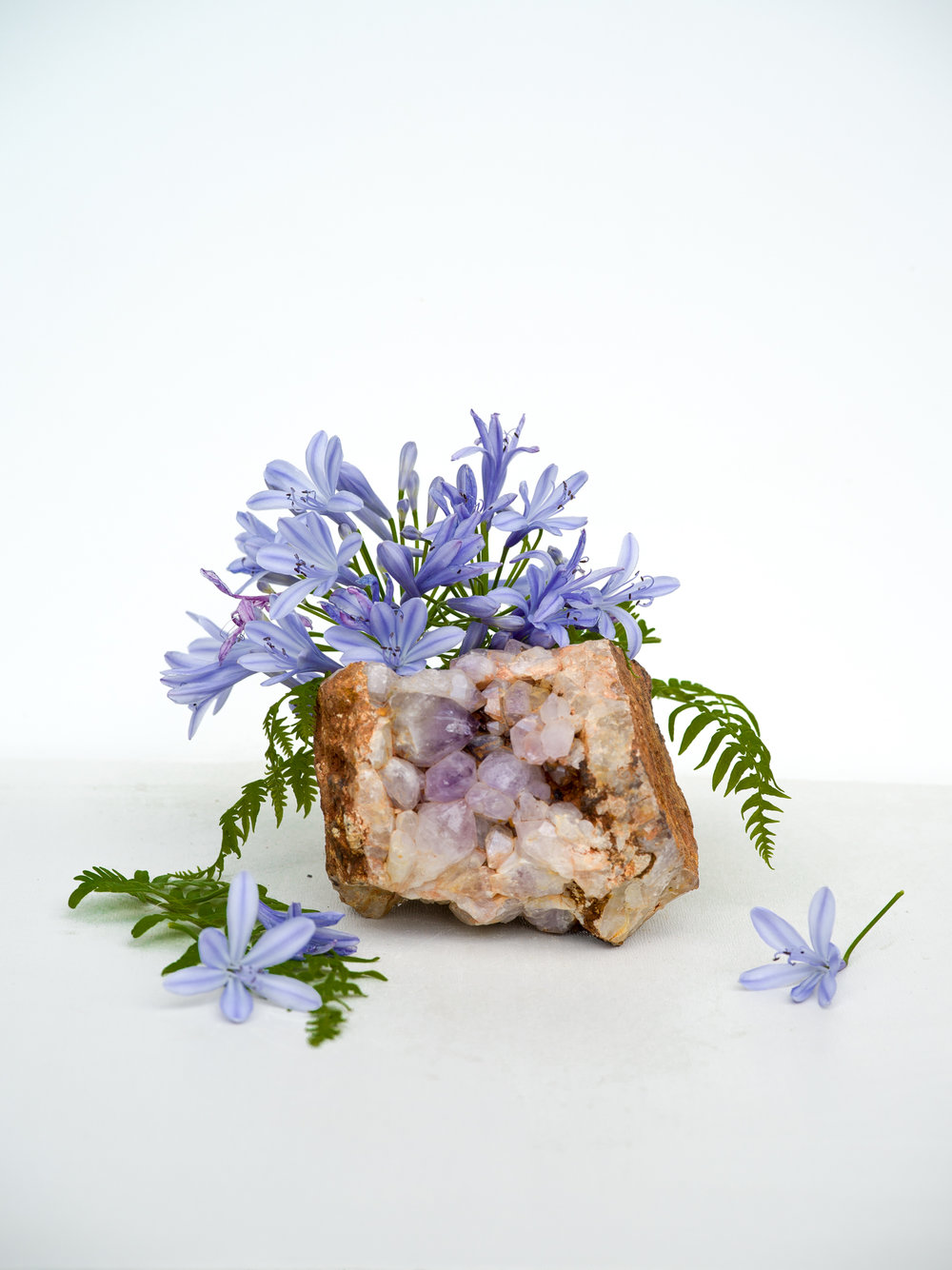 Agapanthus, Amethyst, and Fern,  2018  Signed on verso Archival pigment print back mounted to plexi with UV coating 30 x 24 inches  Edition of 3 + 1AP   40 x 30 inches Edition of 3 + 1AP