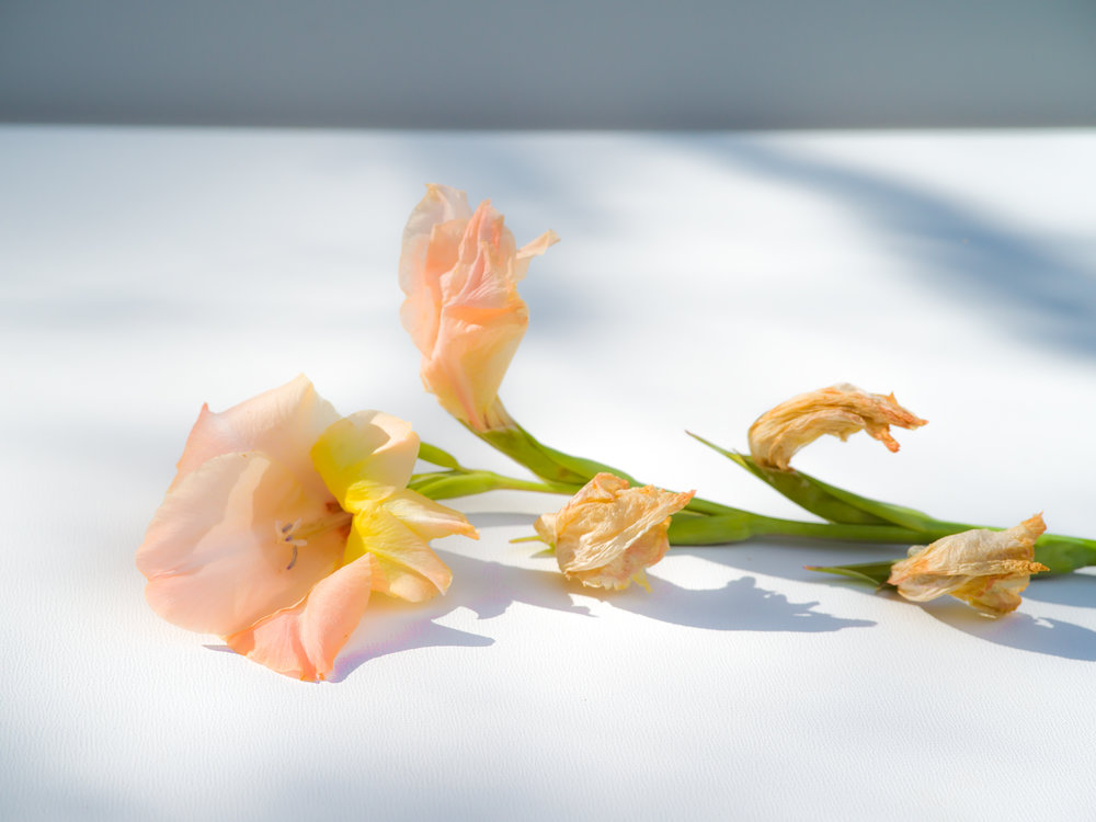 gladiola-1.jpg