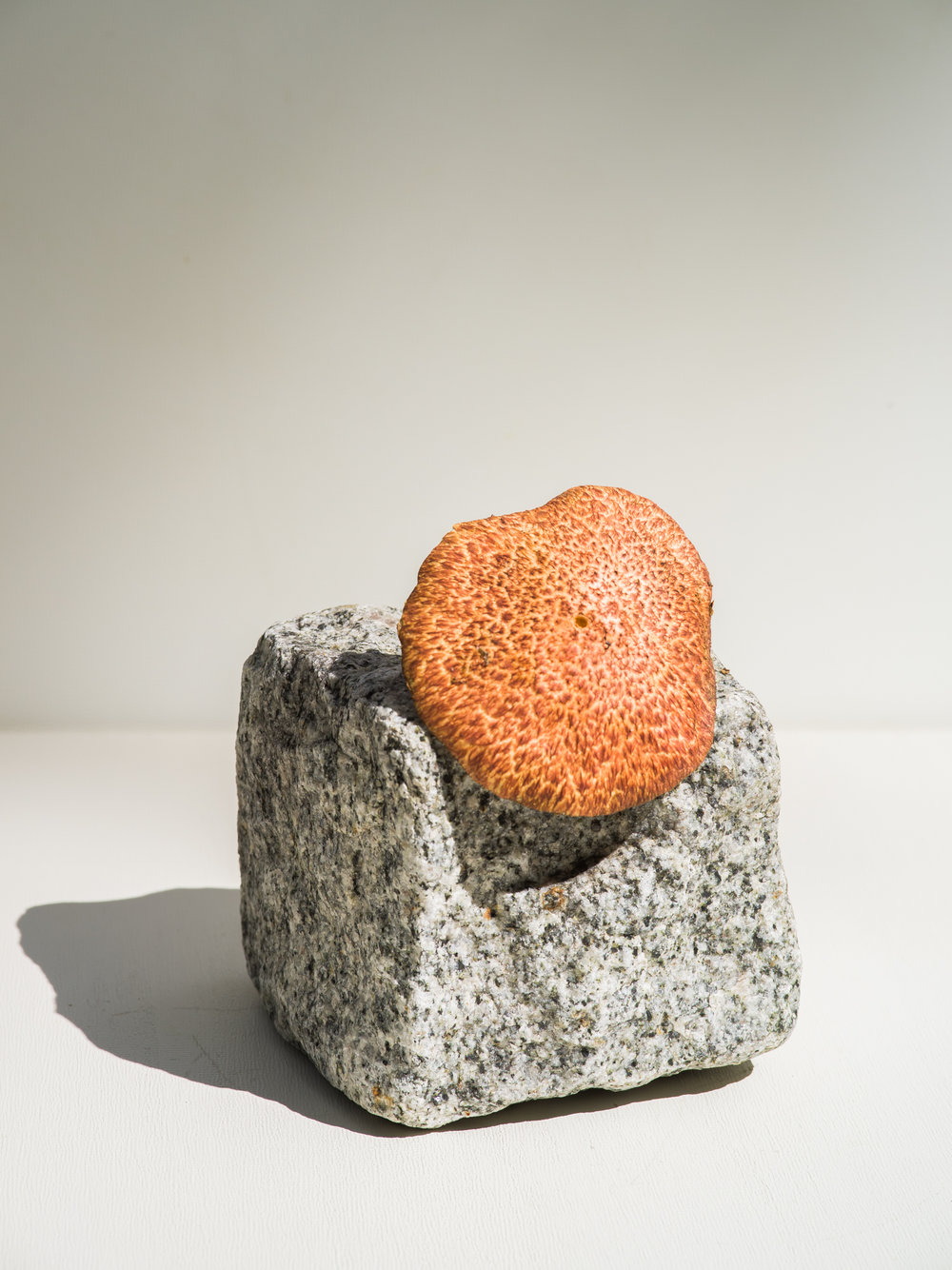 granite with mushrooms-1-2.jpg