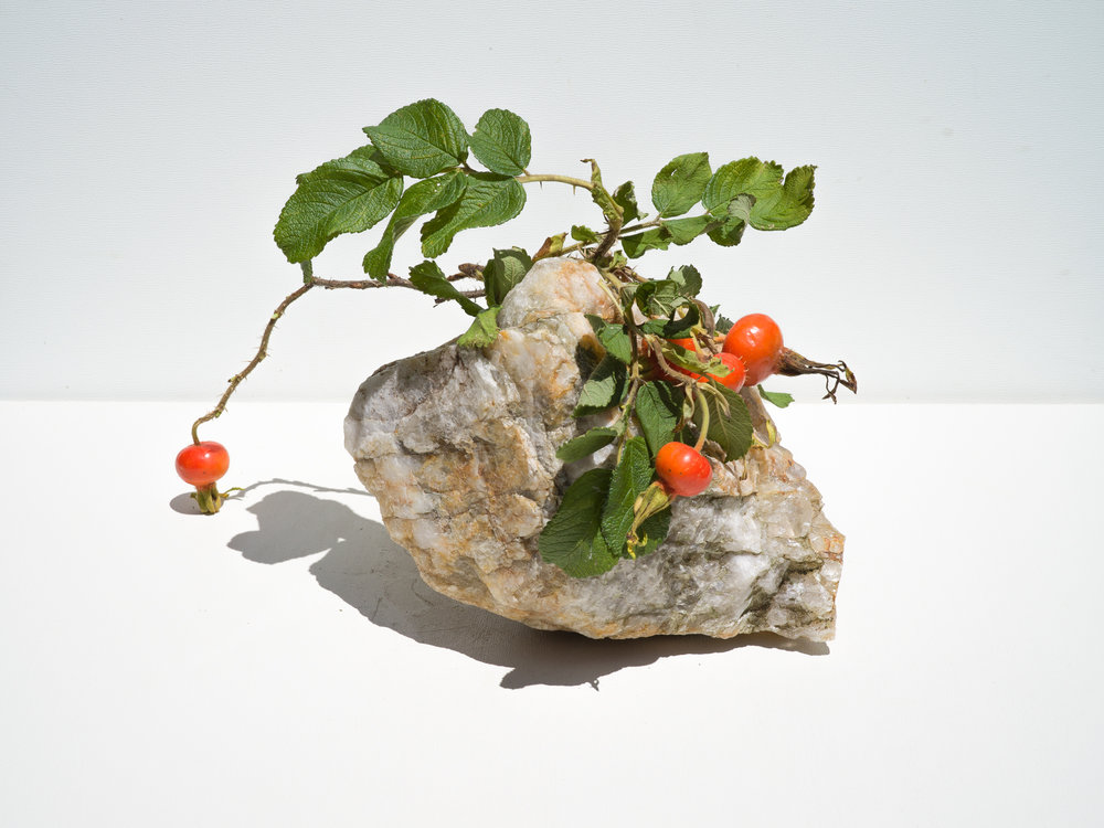 Rose Hip with Quartz , 2018  Signed on verso chromogenic dye coupler print 30 x 30 inches Edition of 3 + 1AP 48 x 48 inches Edition of 3 + 1AP