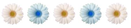 5 Star Daisies
