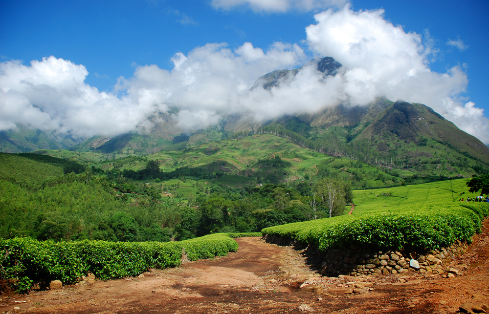 Mt. Mulanje Malawi surrounded by tea fields