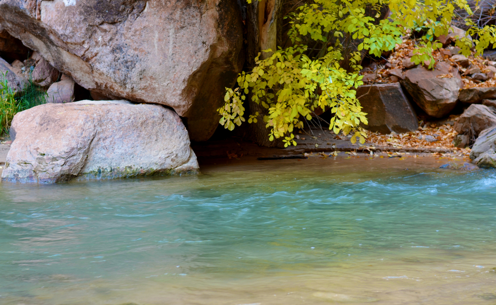 The beautiful Zion River than meanders through the park