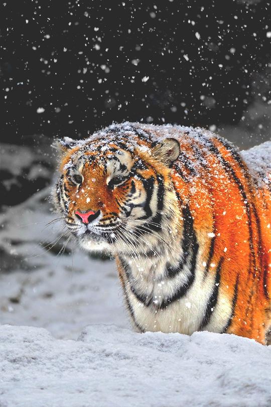 Snow Flakes  ©