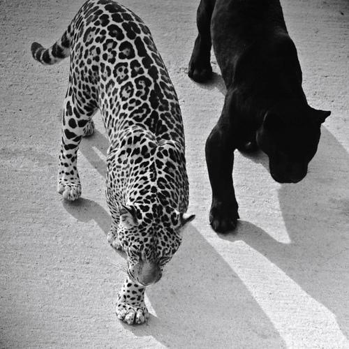 vumei: creelf: Cats / / models black&white modern street fashion / /