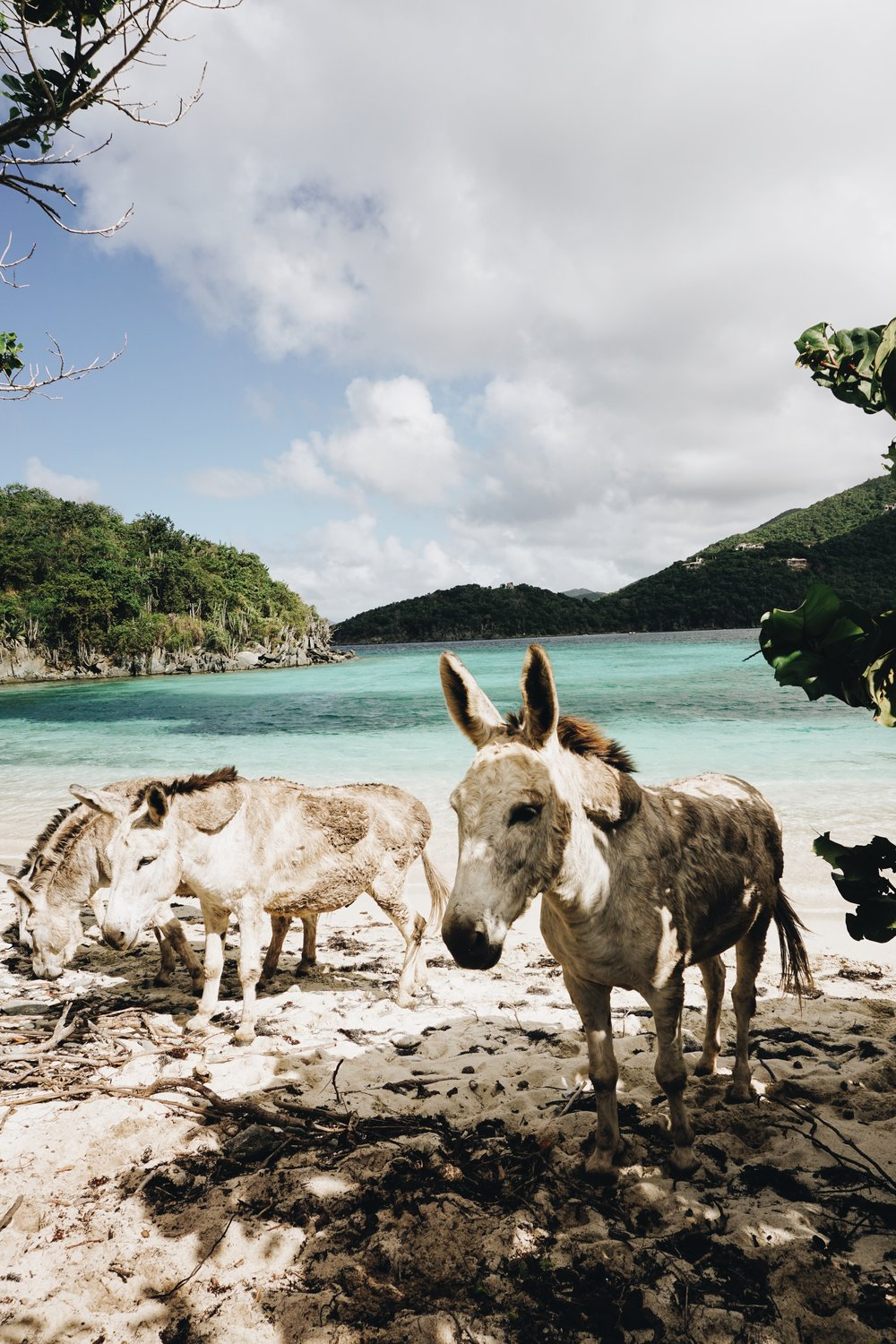 Travel Guide to St. John