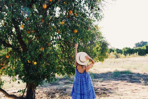 Travel Guide to Ojai, California.