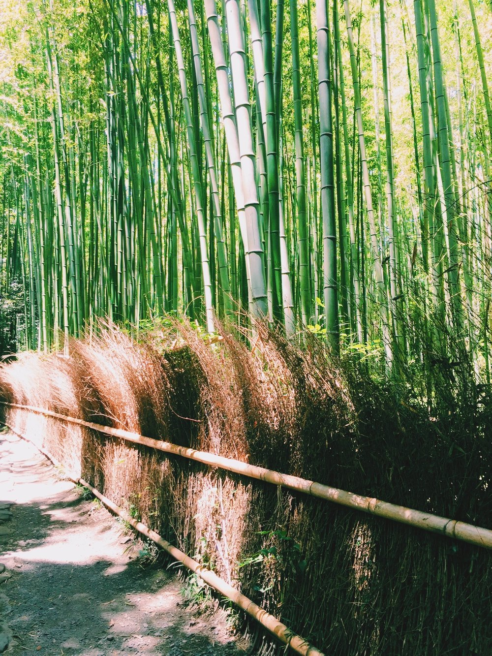 Bamboo Forest, Travel Guide to Kyoto, Japan