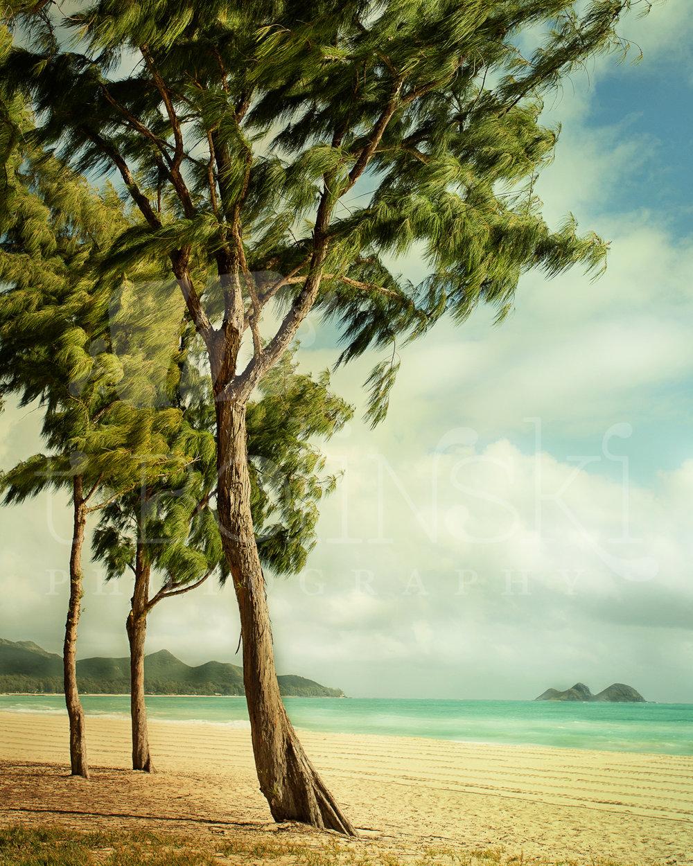 Tree V.S. Ocean Wind