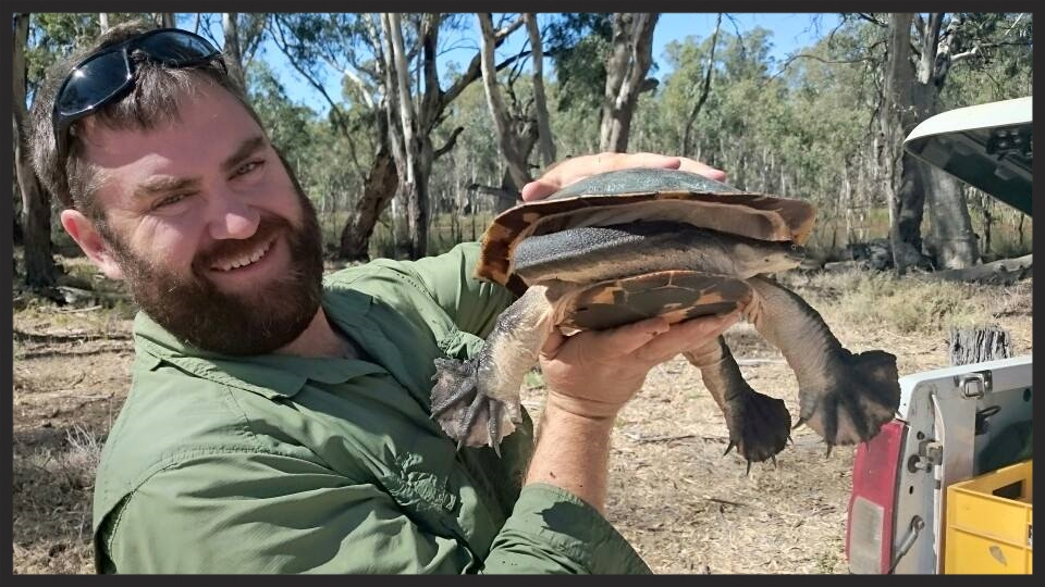 Me with a gravid female Broad-Shelled Turtle ( Chelodina expansa ) before she laid eggs.