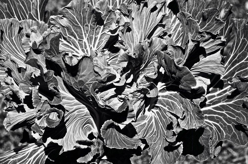 flowers-640524_1920.jpg