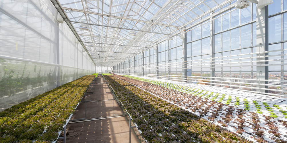 Urbanfarmers for Floor zegwaard