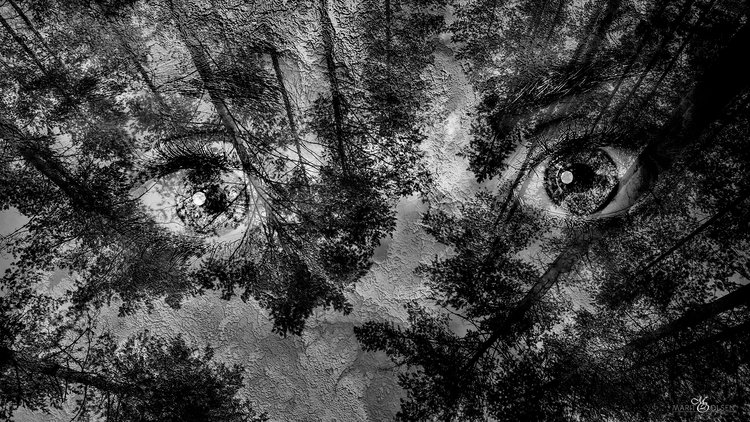 Image result for skog kunst