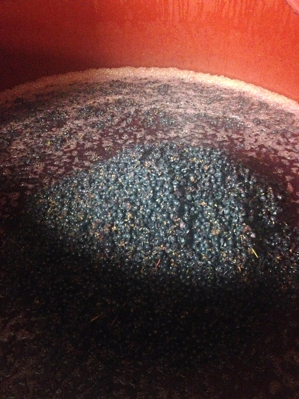 Cabernet Franc grapes lightly crushed and macerating in the vat for a few weeks before they are put in the press