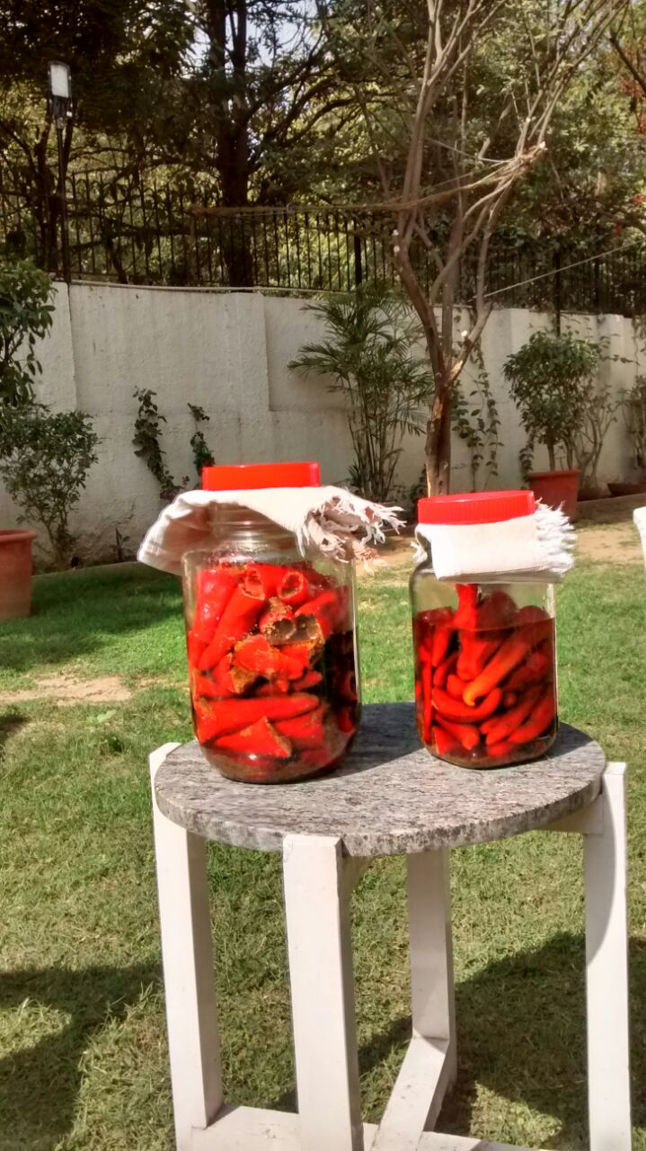 More chilli pickle cooking in the sun