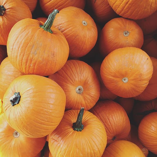 October! 🍂 It's officially THE best month of the year. Hope you're all feeling these fall vibes. Any other Scorpio sisters out there?! ♏️🎃 . . . . . . . . . #wholeapothecary #fall #october #pumpkins #scorpio #sundayfunday #weekend #shoplocal #shopsmall #denver #colorado #handmade #organic #smallbusiness #vegan #allnatural #plants #naturelovers #naturelover #flowers #greenbeauty #beauty #beautyblogger #beautybloggers #bbloggers #naturalbeauty #skincare #handcrafted #selfcare #vsco