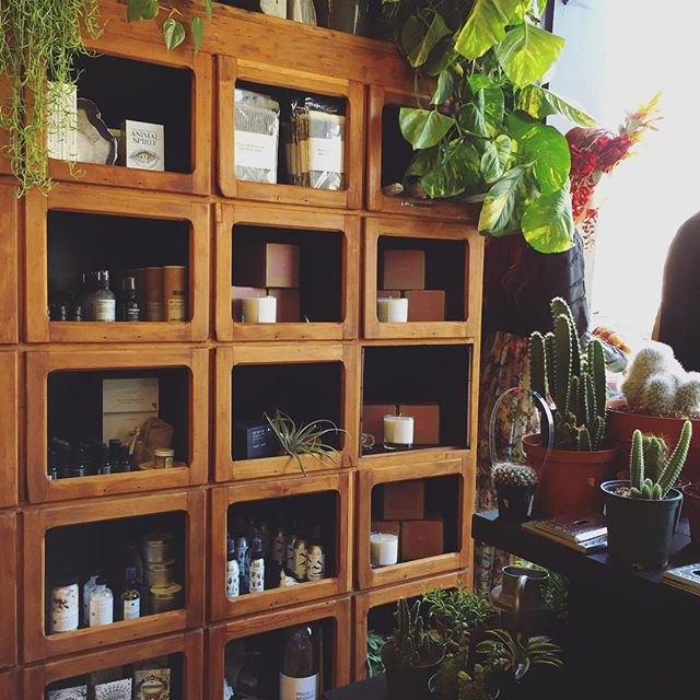 plants + plant-based products...everything you need . . . . . . . . . #wholeapothecary #allnatural  #midweek #plants #succulents #smallbusiness  #greenthumb #shoplocal #shopsmall #denver #colorado #handmade #organic #smallbusinessowner #vegan #allnatural #plants #naturelovers #naturelover #flowers #greenbeauty #beauty #beautyblogger #beautybloggers #bbloggers #naturalbeauty #skincare #handcrafted #selfcare #vsco