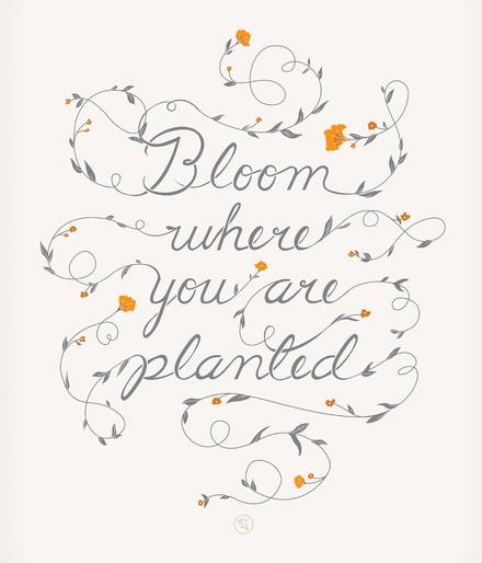 SBBlog_Bloom