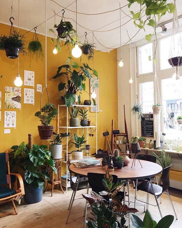 🇷🇺 Wildernis, Amsterdam September 2017 Here's some sunny yellow to brighten your Tuesday night. 💛 Wildernis is one of my favourite stores 🌿🌵& it just so happens to be opposite the awesome Foodhallen. Plants & yummy food? Winning 😄 #exploreamsterdam