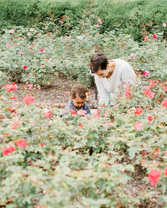 Let's get lost in a bed of roses or frolic among the trees! Mini-sessions September 22 at Greenwood Park and September 23 at the Rose Garden. Dm for details and times available! . . . . . #desmoinesphotographer #familyphotographer #simplychildren #humansofjoy #seekthesimplicity #habitandhome #nothingisordinary #thisjoyfulmoment #thisishappy #thehappynow #pursuepretty #flashesofdelight #thepursuitofjoyproject #thisjoyfulmoment #littleandbrave #letthekids #wildandfree #candidchildhood #theartofslowliving #momlife #shootportraits #iowafamilyphotographer #shootportraits #portraits