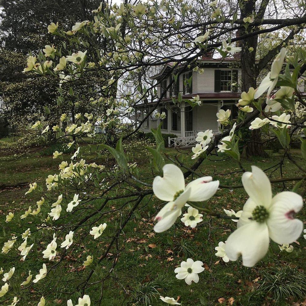 In Bloom around Mabry-Hazen House