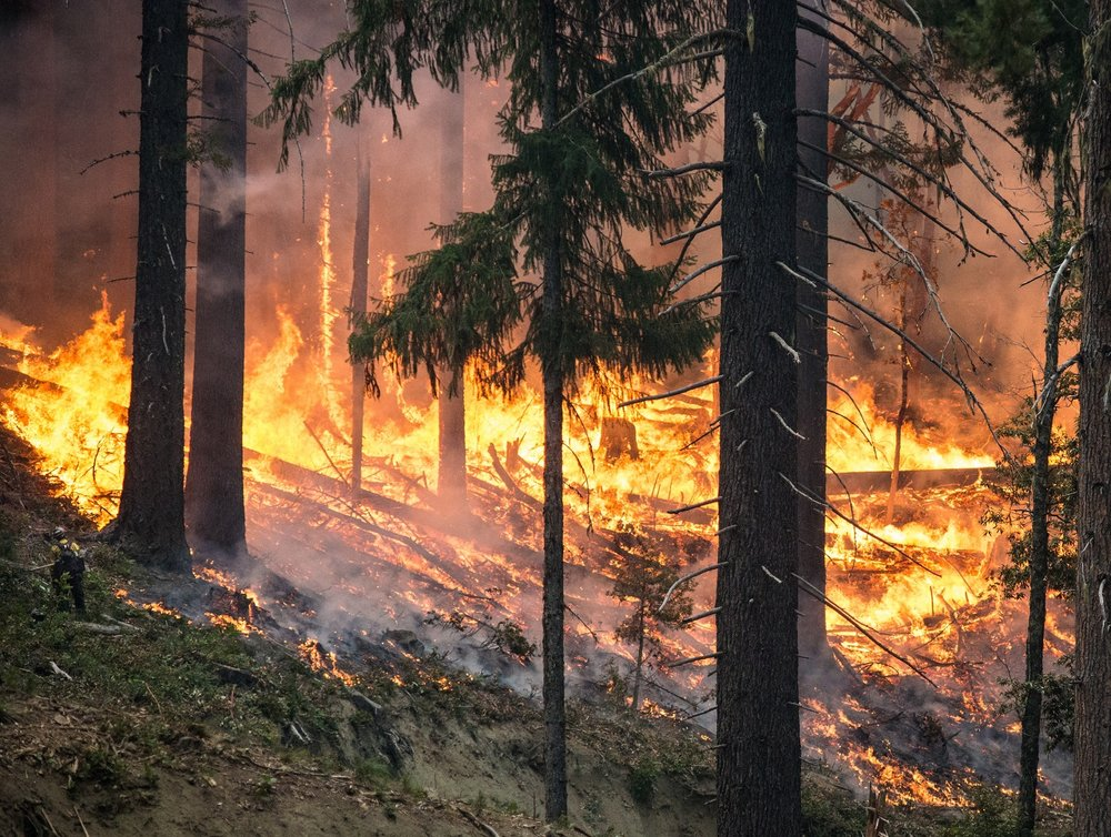forest burning into the night