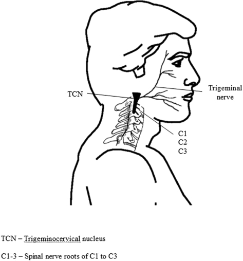 Trigeminocervical Nucleus.jpg