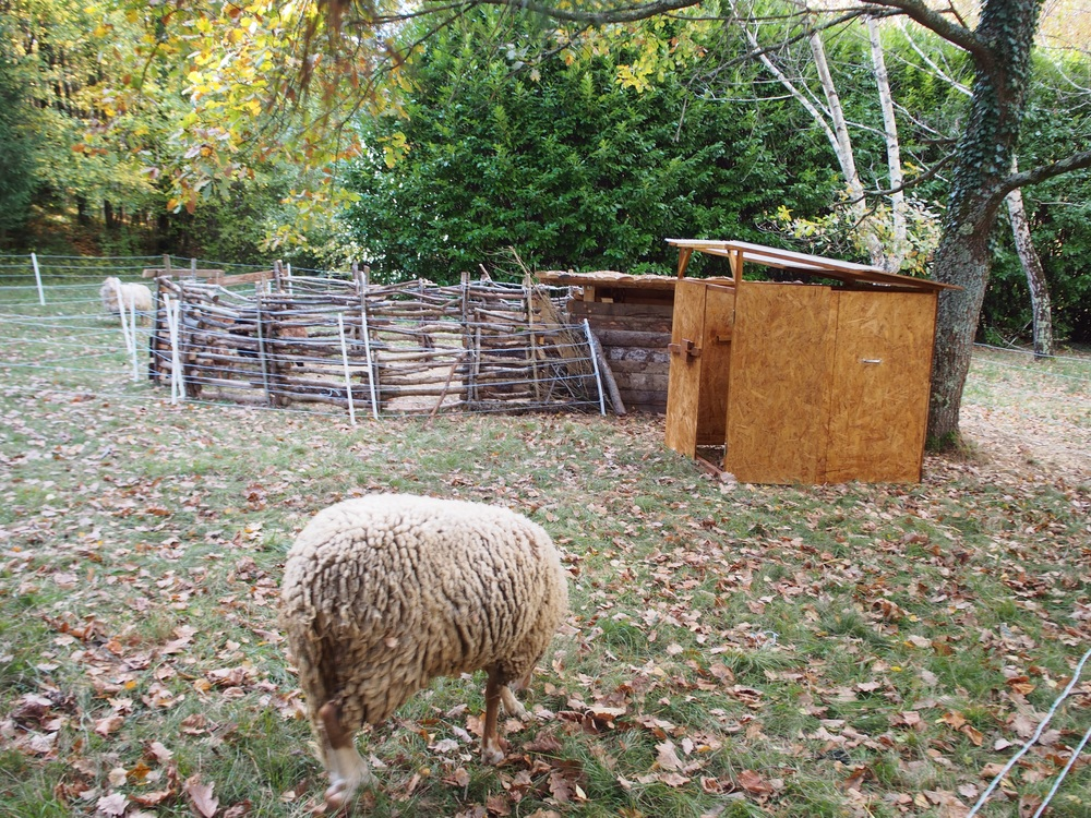 The new sheep shelter in place