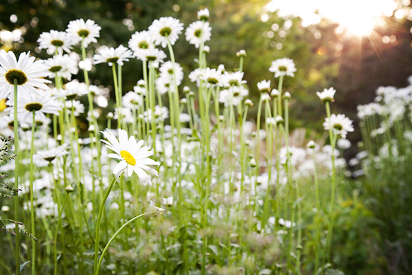 June Flowers-4559_CLweb