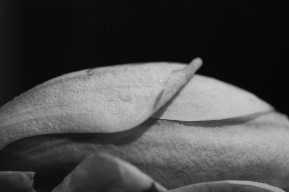 Magnolia - 03.jpg