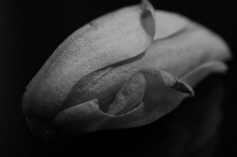 Magnolia - 05 Kopie.jpg