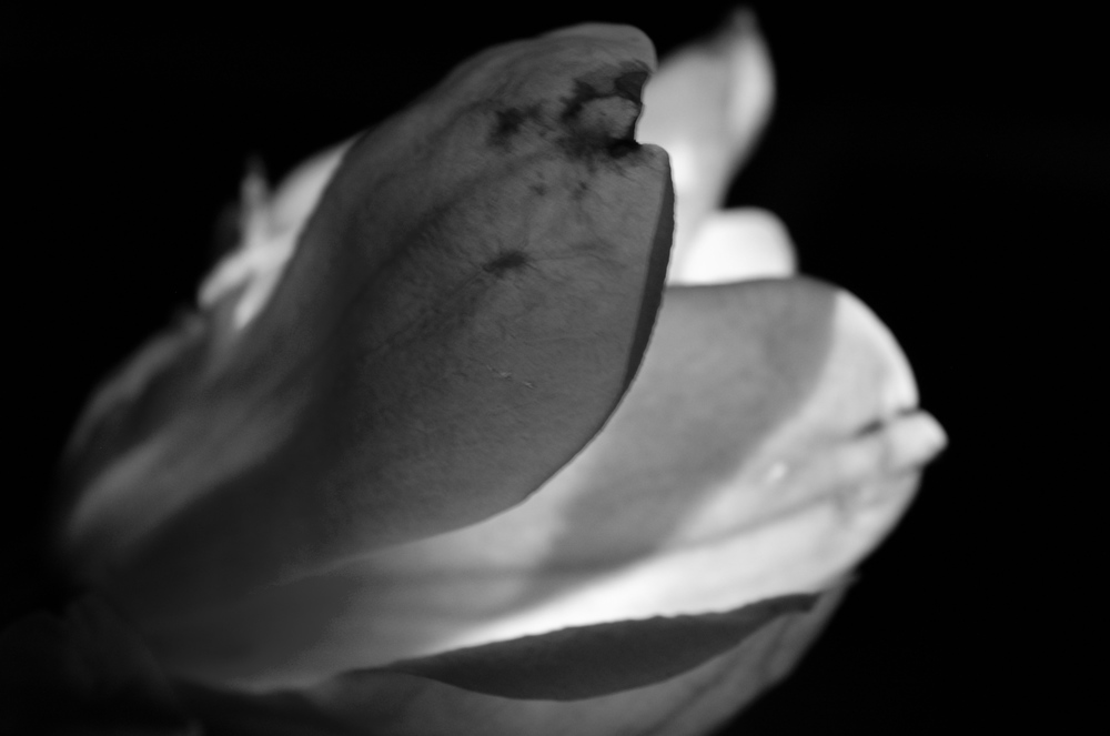 Magnolia - 19.jpg