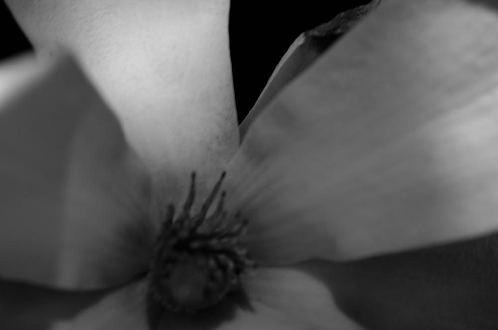 Magnolia - 33.jpg