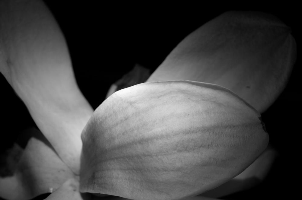 Magnolia - 25 Kopie.jpg
