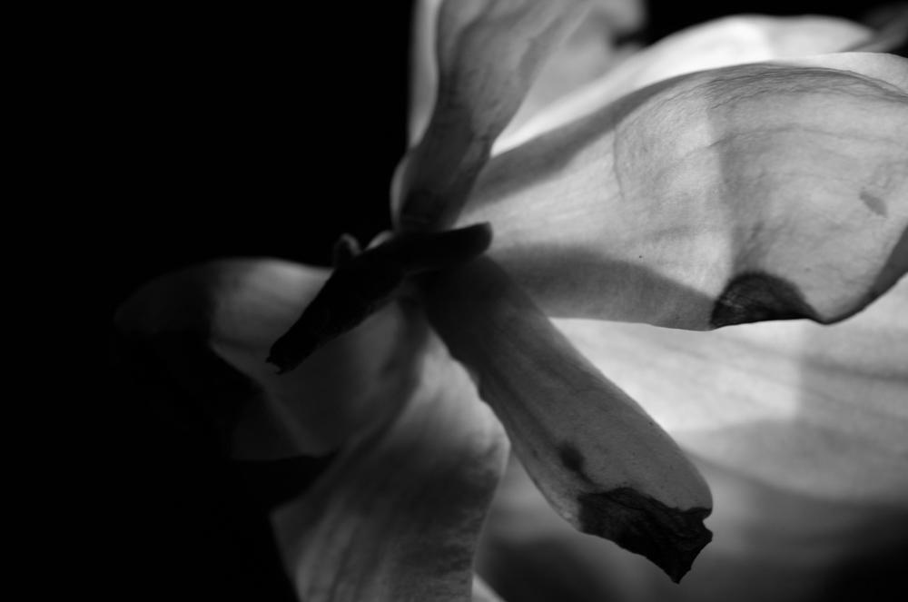 Magnolia - 44.jpg