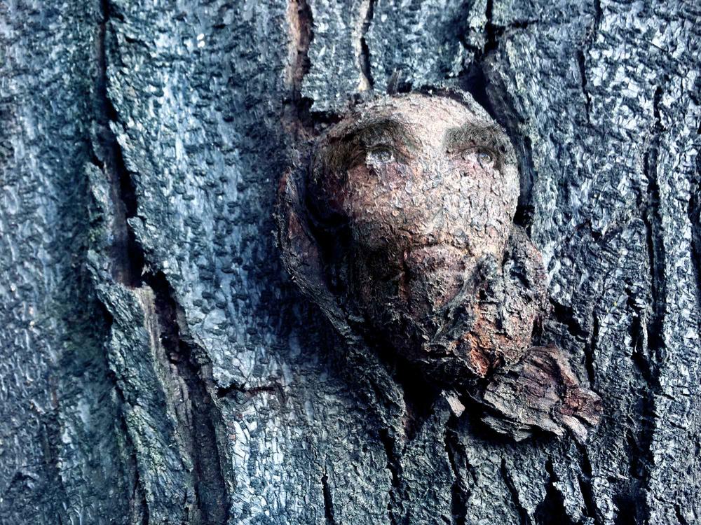 Tree Shamans