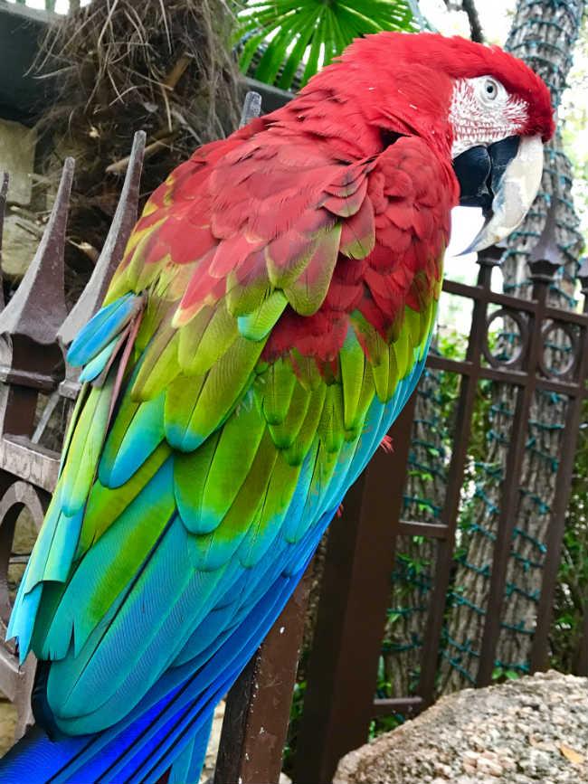 macaw 3.jpg