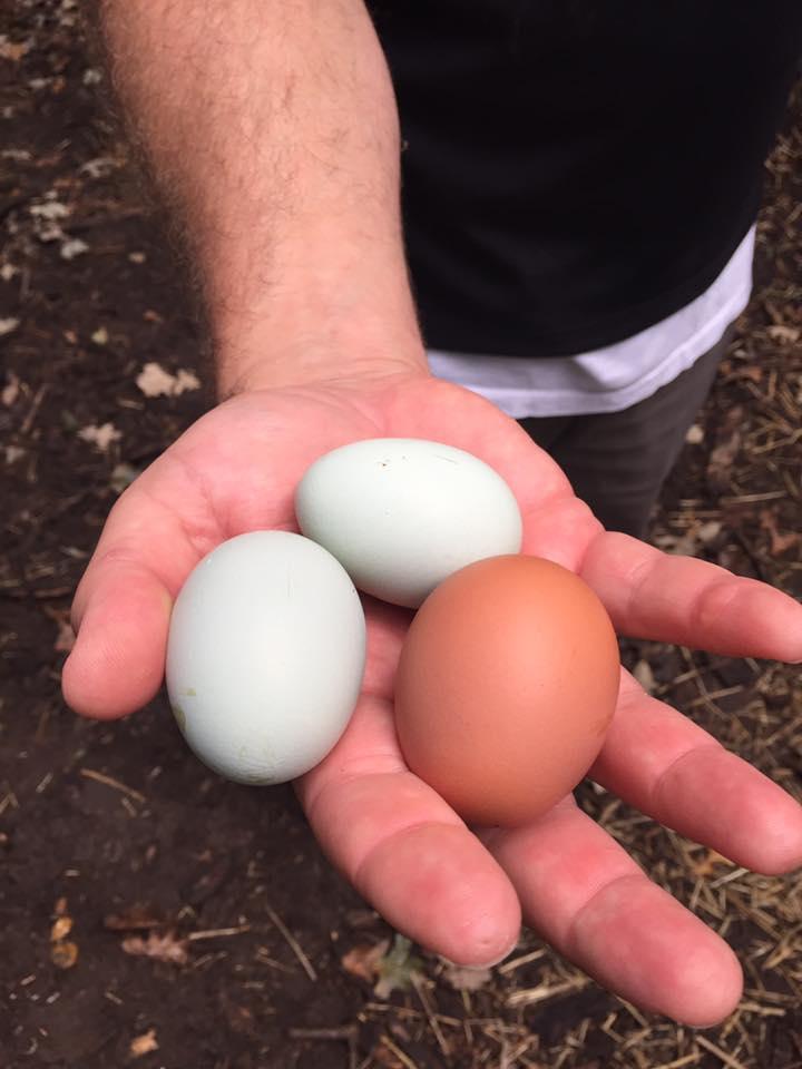 Real free-range organic eggs.