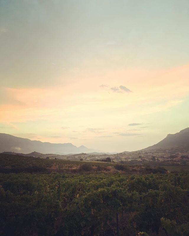 Looking down the valley picking Syrah for the Rosè today! . . . . #wineo #winewednesday #outdoors #harvest #crush #working #fun #times #freshair #roussillon #france #winewankers #winestagram #vine #vineyards #sun #sunrise #mountains #climbing #pressing #winelovers