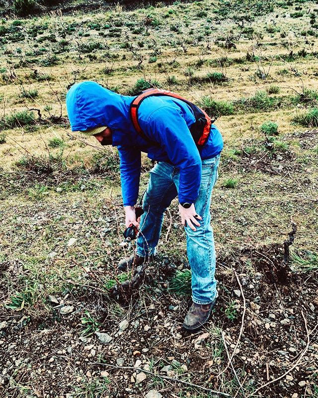 Pruning! One of the most important times of the year. Love being outside and connecting with my vines. Regardless how cold it is. Every year always thinking of was to improve. . . . . #outfits #outside #outdoors #fresh #air #vines #wino #wine #winelover #france #winesofinstagram #winetasting #winter #sleeping #resturants #food #blue #pruning #season #relax #fingers #bush #vine #thinking #garlic #searching