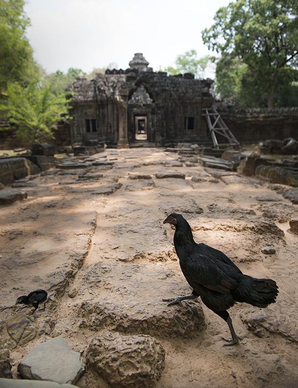 Chicken Wat.jpg