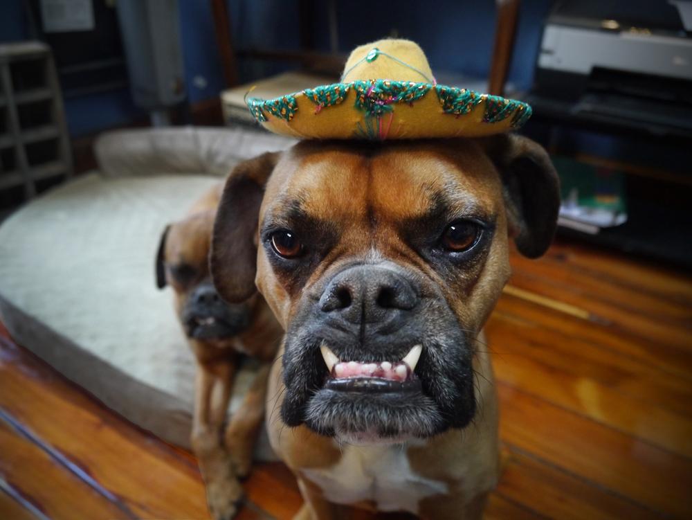 Winston de Mayo (V) sm.jpg