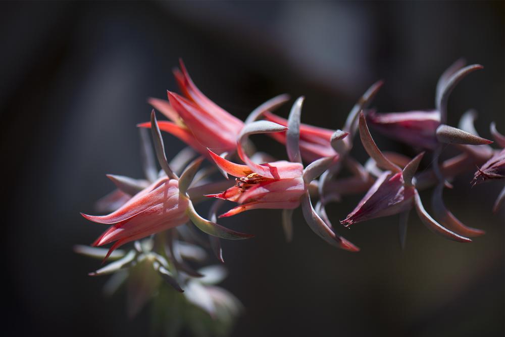 Pink Ass Plant 1.jpg