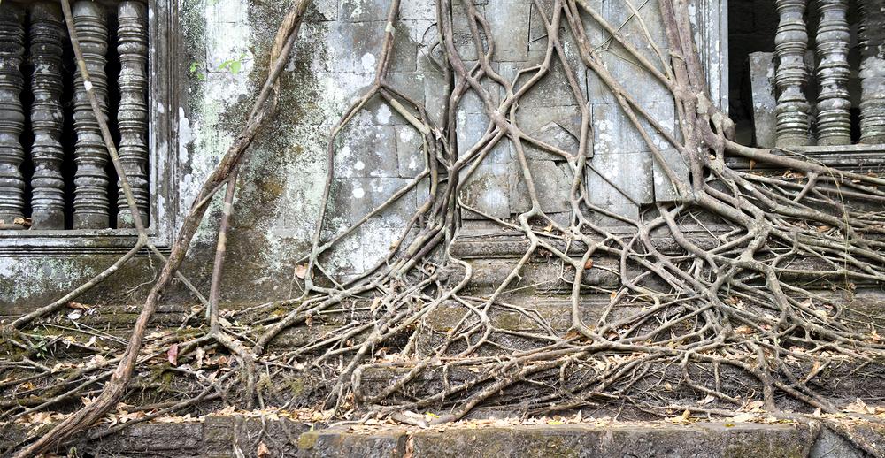 Beng Malaea Roots & Pillars.jpg