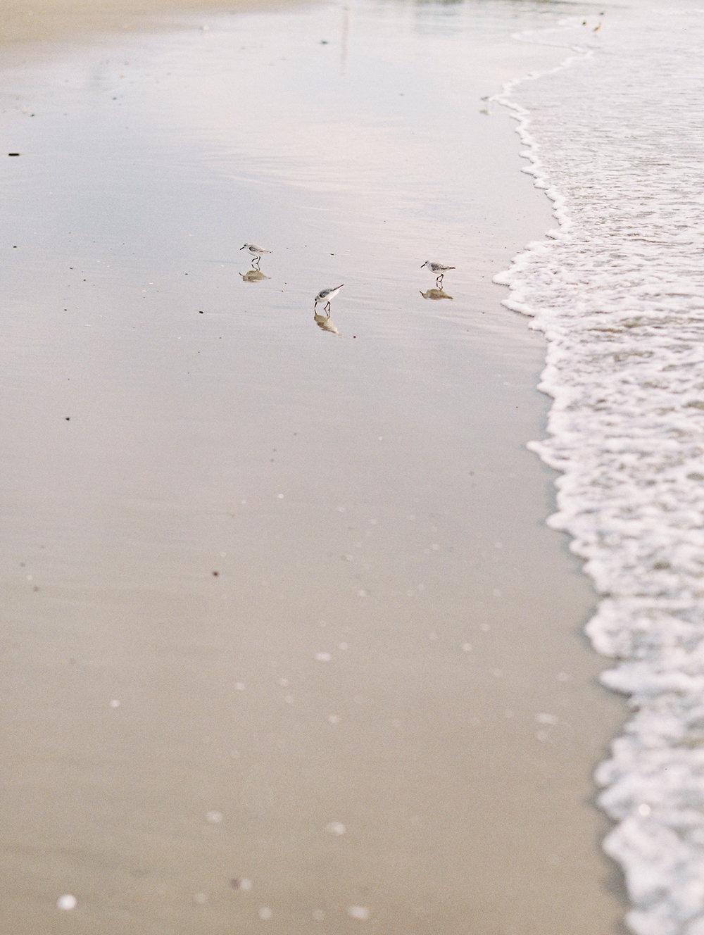 santa_beach_wedding_planner_rae_and_moore_49.JPG