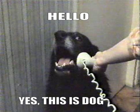 HelloDog